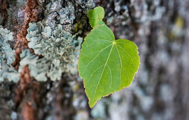 Guided Nature Walk | Shoreline Plants