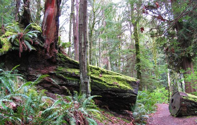 Seward Park's Ecosystem