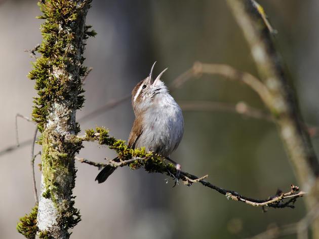Birds of Seward Park
